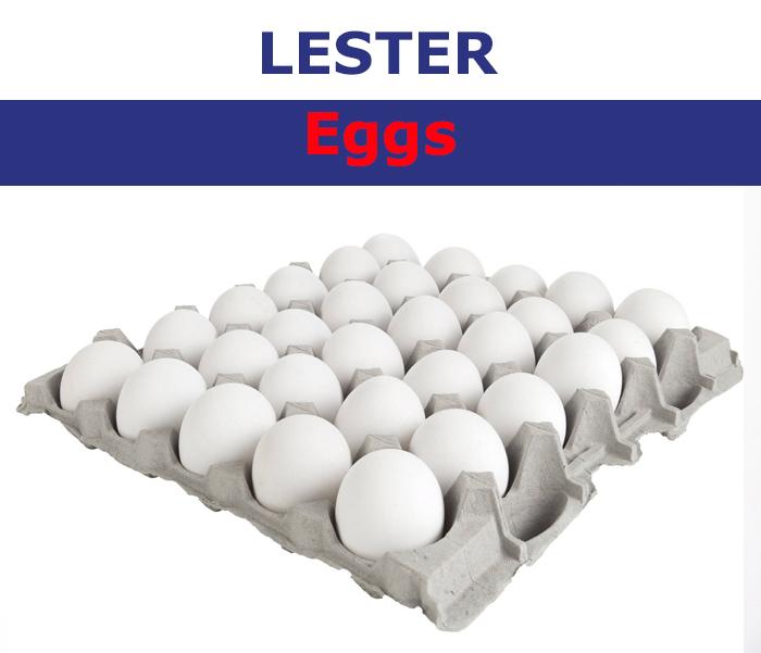 LESTER EGG WHITE MEDIUM 30